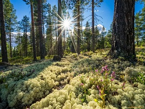 Норвежцы первые в мире прекратили вырубать леса